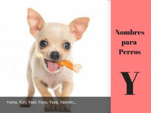 Los nombres para perros con Y