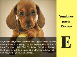 Los nombres para perros con e