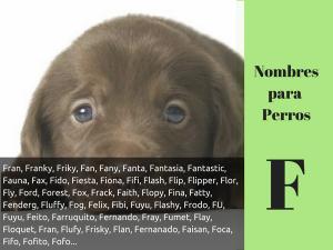 Los nombres para perros con f