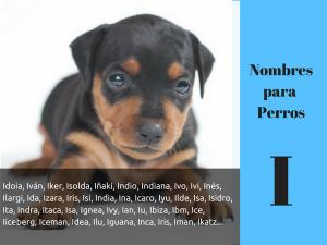 Los nombres para perros con i