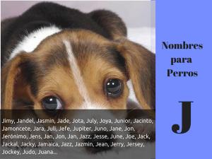 Los nombres para perros con j