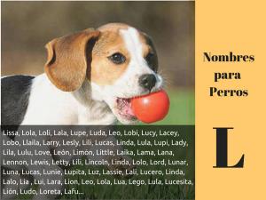 Los nombres para perros con l