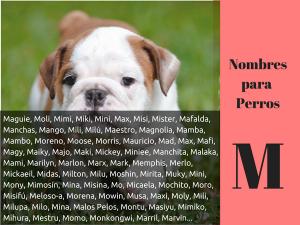 Los nombres para perros con m