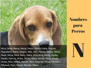 Los nombres para perros con n