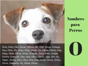 Los nombres para perros con o