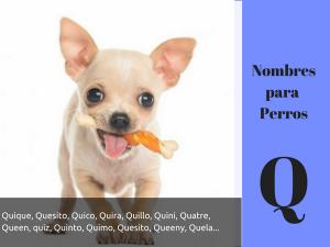 Los nombres para perros con q