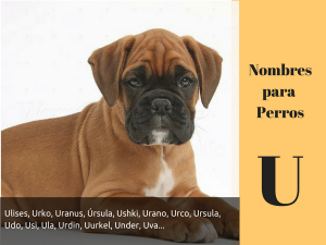 Los nombres para perros con u
