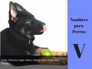 Los nombres para perros con v