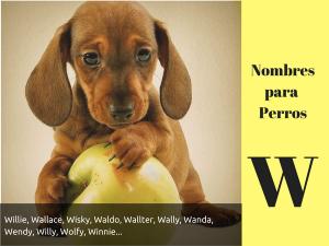 Los nombres para perros con w