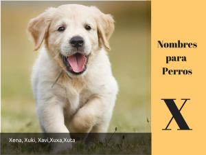 Los nombres para perros con x