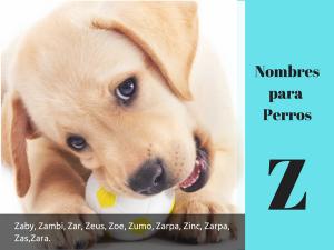 Los nombres para perros con z