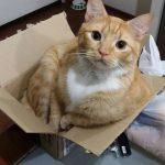 paginas de adopcion de gatos , animales de gatos ,