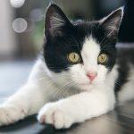 tienda de ropa para gatos , informasion de gatos