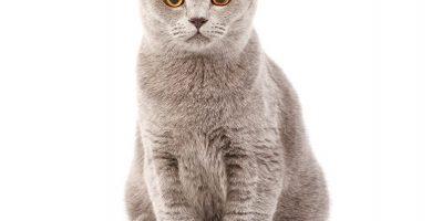 comprar accesorios para gatos , tienda para gatos online , gatos para , gatos informacion para niños , para gatos , utensilios gatos , ver gatos , gatos para adopcion , tienda animal gatos , venda de gatos , gatos gratis , gatos y , buscar gatos , tienda accesorios gatos , implementos para gatos , como hacer accesorios para gatos , gatos persas gratis , gatos para gatos , tienda de accesorios para gatos , criadero de gatos , platos para gatos , comprar accesorios gatos , donde adoptan gatos , busco gatos en adopcion , lugares para adoptar gatos , compra de gatos , gatos gigantes , lo gatos , tienda de animales gatos , articulos gatos , gatos persas pequeños , mascotas gatos en adopcion , adopcion de gatos pequeños , los gatos , sobre gatos domesticos , fotos de gatos , tienda mascotas gatos , fotos gatos , investigación sobre los gatos , fotos de gatos persas , adoptar gatos en adopción , gatos recien nacidos , todo sobre gatos cachorros , cosas para gatos bebes , informacion de gatos domesticos , gatos graciosos , todo de gatos , paginas para adoptar gatos , ber gatos , gatos mascotas domesticas , gatos wikipedia , de gatos , gatos gatos , comprar utensilios para gatos , como son los gatos , gatos de raza para adoptar