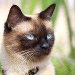 qué son los gatos , todos los gatos , gatos de gatos