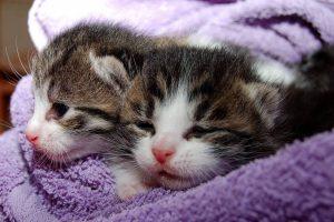 gatitos bebes, gatos recien nacidos