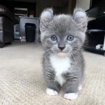 gatos persas abandonados , videos de gatos en español