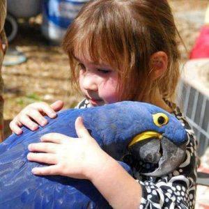mascotas exóticas guacamayo azul