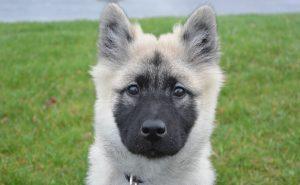 cachorro hembra perro nova,nombres originales para perros, nombres de perros famosos, nombres de perros originales, nombres para animales, buscar nombres de perros, nombres bonitos para perros, nombre para mascotas