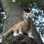 gata arriba del arbol,nombres para gatas, nombres de gatas, nombres para gatitas, nombres de gatas, nombres para gatos hembras,