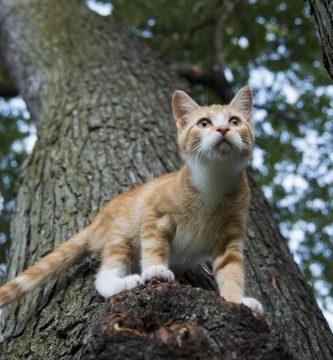 nombres de gatos varones , nombres para peluches machos , nombres tiernos para mascotas , nombres populares , nombres de gatos de disney , nombres para gata negra , nombres para perros , gato hembra , gatitos tiernos , nombre para gatas grises , nombres para felinos , nombre para gatas finas , nombres lindos , nombres lindos para gatos machos , el mejor nombre para un gato , nombres para gatos blanco machos , nombres cortos para gatos machos , nombres para mascotas gatos , nombres de gatos machos tiernos , nombres de gatos famosos hembras , nombres para machos , nombres mascotas , nombres cool para gatos , nombres para gatos grises machos , nombres de gatos siameses , nombres para gatos famosos , nombres para gatos pequeños , nombres para gatos machos blancos , nombres para gatos machos y hembras , nombres de gatos lindos , gato gris , nombres para , nombres geniales para gatos
