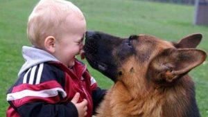 niño con pastor alemán