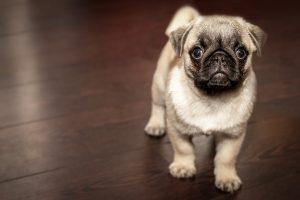 nombre de perritas en griego,nombres para perritas, nombres de perritas, nombres para perros hembras, nombre de perritas, nombres de perras, nombre para perras, nombre de perras, nombres de perras,