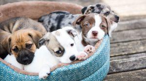 nombre para cachorros,nombres originales para perros, nombres de perros famosos, nombres originales para perros, nombres para mascotas machos, nombres para perras, nombres originales para perros,