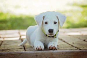 nombres de perritas famosas,nombres para una perrita, nombre de perritas pequeñas, nombres para cachorras, nombres de mascotas hembras,