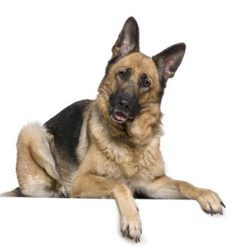 nombres para perros , nombres de perros , nombres de perros machos , nombres para perros machos , nombres de perros pequeños , nombres de perros hembras , nombres para perros pequeños , nombres para mascotas , nombres de perros famosos , nombres para perros hembras , nombres perros , nombres de perros y su significado , nombres para cachorros , nombres de mascotas , nombres para perros grandes , nombres para perros pitbull , nombres de cachorros , nombres para perritas negras , nombres de perros grandes , nombres para perritas con significado , nombres cortos para perros , nombres originales para perros ,