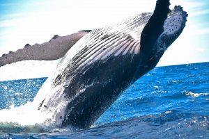 ballena azul,tortuga marina,animales marinos,imagenes de animales marinos,tortuga marina,los animales marinos,animales del mar