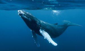 ballena azul nadando,orca,estrella de mar,animales marinos,imagenes de animales marinos,los animales marinos,animales del mar
