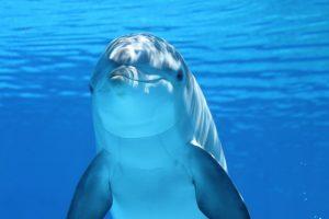 delfin mamifero marino,delfin,delfines,los delfines,el delfin,caracteristicas del delfin,caracteristicas de los delfines,delfin caracteristicas,delfin rosado,como se reproducen los delfines,como nacen los delfines,