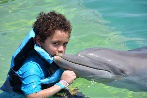 delfin terapia,grupo de delfin,nacimiento delfin,delfin,delfines,los delfines,el delfin,caracteristicas del delfin,caracteristicas de los delfines,delfin caracteristicas,delfin rosado,como se reproducen los delfines,como nacen los delfines,