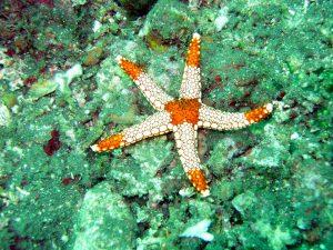 estrella de mar,animales marinos,imagenes de animales marinos,los animales marinos,animales del mar