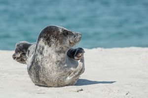 foca fraile,animales marinos,imagenes de animales marinos,los animales marinos,animales del mar
