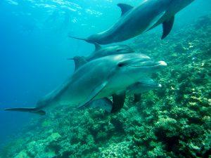 habitad del delfin,delfin,delfines,los delfines,el delfin,caracteristicas del delfin,caracteristicas de los delfines,delfin caracteristicas,delfin rosado,como se reproducen los delfines,como nacen los delfines,