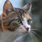 que son los gatos domesticos , los gatos de , a los gatos