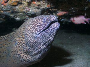 morena,animales marinos,imagenes de animales marinos,los animales marinos,animales del mar