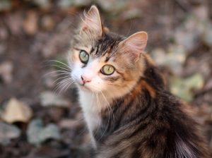 nombres para gata, nombre de gatas, nombres para gata, nombres gatas, nombres para gatas bebes, nombres para gatas hembras,