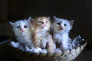 gatas nombres para gatas, nombres de gatas, nombres para gatitas, nombres de gatas, nombres para gatos hembras,