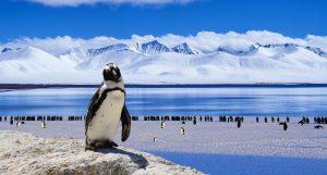 pinguinos no pasan frio,caracteristica pinguinos,pareja pinguinos,pinguinos,pinguino,pinguino emperador, los pinguinos, pingüinos,el pinguino,pingüino emperador, pinguinos,la marcha de los pinguinos, la vida de los pinguinos,caracteristicas del pinguino,