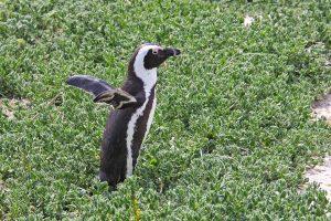 pinguinos no pueden volar,fidelidad pinguinos,pinguinos no pasan frio,caracteristica pinguinos,pareja pinguinos,pinguinos,pinguino,pinguino emperador, los pinguinos, pingüinos,el pinguino,pingüino emperador, pinguinos,la marcha de los pinguinos, la vida de los pinguinos,caracteristicas del pinguino,