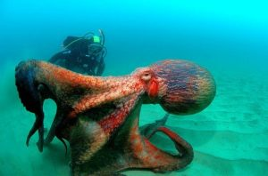 pulpo gigante,nutria marina,salmon chinook,animales marinos,imagenes de animales marinos,los animales marinos,animales del mar