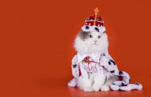 reina gata,nombres bonitos, imagenes de gatas, imagenes de gatitas,