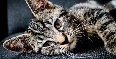 nombres para gatos , nombres para gatas cortos , nombres para gatos y gatas , nombres para gatas elegantes,nombres para gatas en japones y su significado , nombres bonitos para gatas con significado , nombres para gatas en coreano , nombres para gatas plomas , nombres para gatas japones