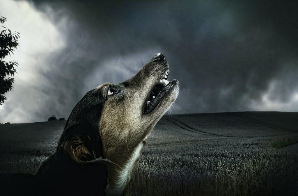 porque aullan los perros - porque los perros aullan, estado de salud, soledad, miedo