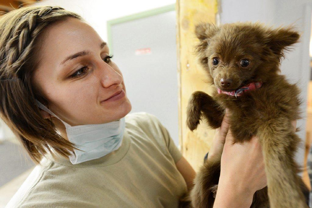 vacuna de perros parvovirus , vacuna de parvovirus en perros precio , inyeccion parvovirus perros