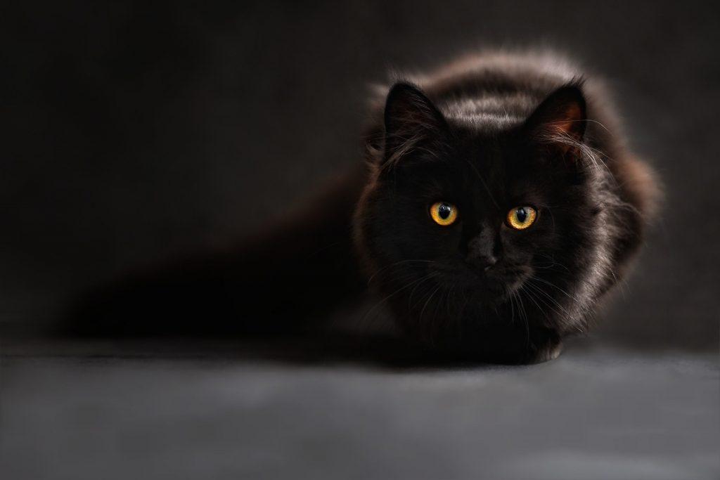 Nombres para gatos, nombres para gatos fáciles,