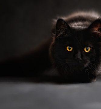 buscar nombres para gatos , nombres comunes para gatos , nombres para gatos bebes hembras , nombres para gatos siameses machos , nombres para gatos mujeres , nombres para gatos siameses hembras , nombres para gatos chiquitos , nombres para gatos machos en japones , los mejores nombres para gatos machos , nombres lindos para gatos hembras , nombres tiernos para gatos machos , lista de nombres para gatos machos , nombres elegantes para gatos , nombres para gatos persas hembras , ver nombres para gatos , nombres curiosos para gatos , buenos nombres para gatos , nombres de para gatos , nombres chinos para gatos , nombres para gatos o gatas , nombres masculinos para gatos , nombres femeninos para gatos , nombres para gatos peludos , nombres para gatos juguetones , nombres populares para gatos , nombres para gatos con m , nombres chulos para gatos , nombres para gatos monos